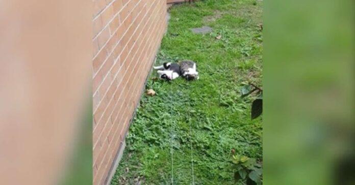 gatti al guinzaglio