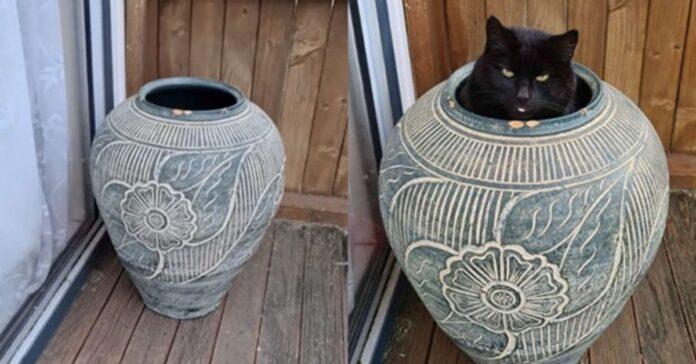 gatto nascosto in un vaso