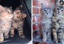 gattine sorelle