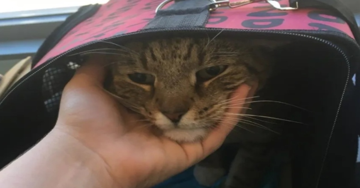 gatto che riceve carezze