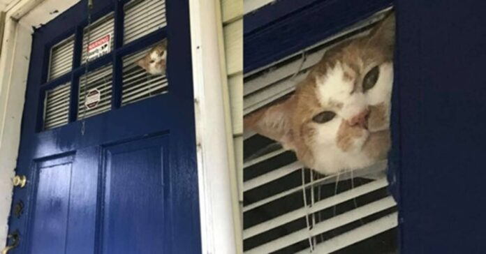 Gatto che osserva da sopra la porta
