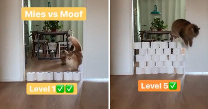 Gatti saltano carta igienica