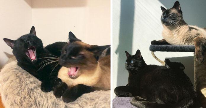 Due gatti di cui uno cieco