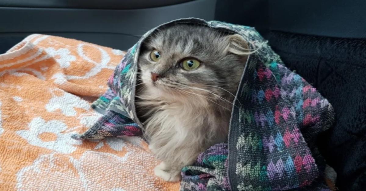 gattina in macchina