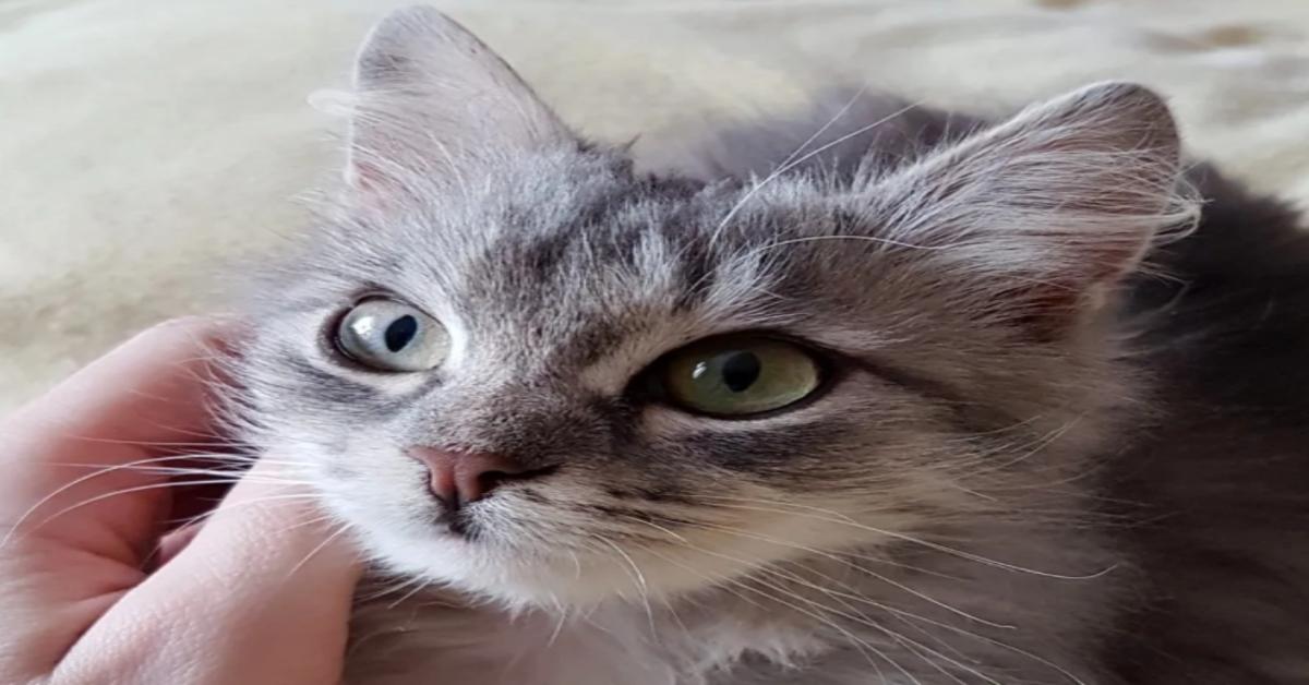 coccole a una gattina