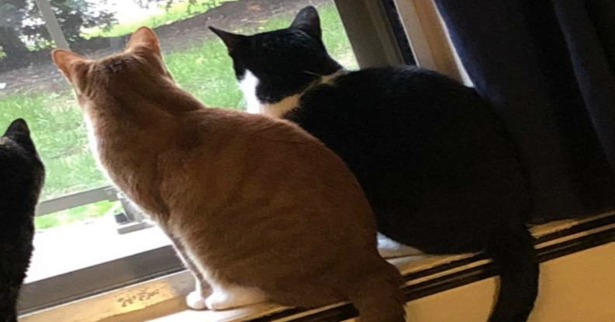 gatti guardano fuori dalla finestra