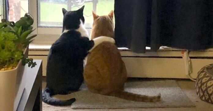 gatto consola l'altro gatto