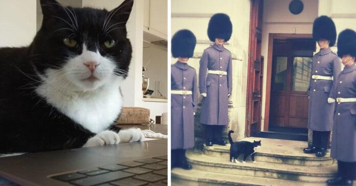 Palmerston gatto ministero degli esteri