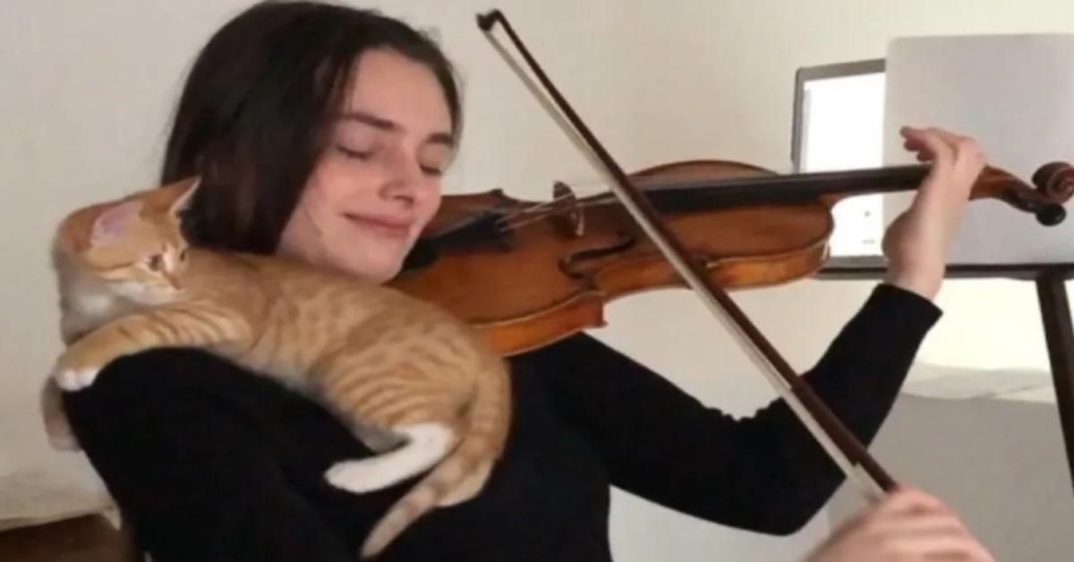 gatto sulla spalla di una violinista