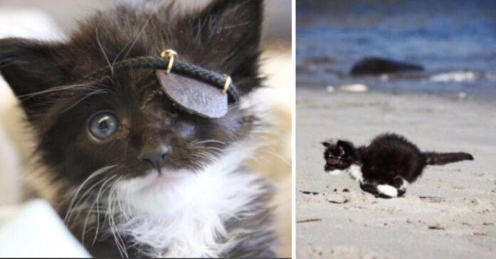 Gattino pirata