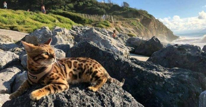 Gatto sopra una roccia