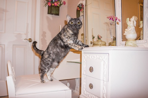 Torta per gatti al tonno, la ricetta semplice e golosa