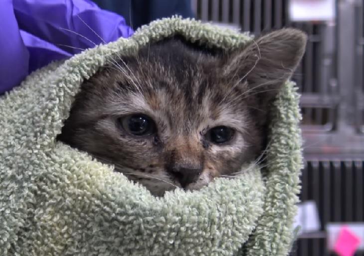 bellflower gatta paura essere umano