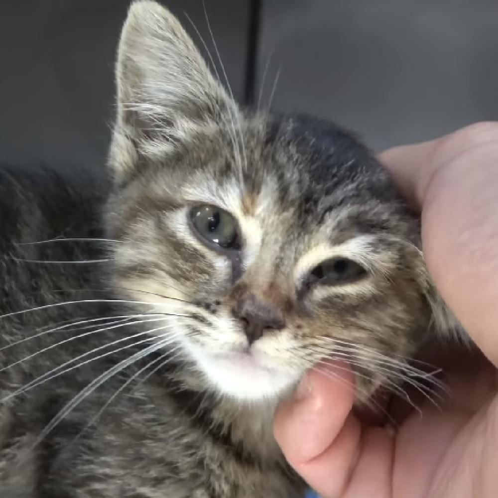 bellflower gatta aspetta adozione