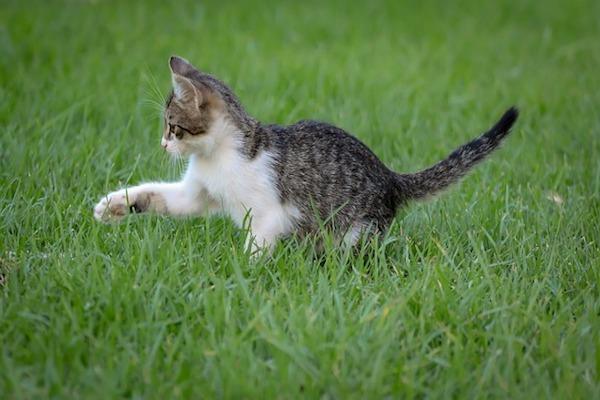 micetto gioca in mezzo all'erba