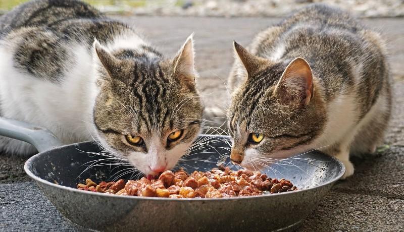 gatto che invecchia dieta ideale