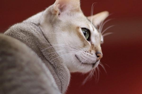 gatto che guarda di traverso