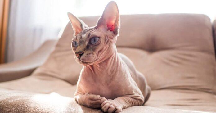 gatto sta seduto sul divano
