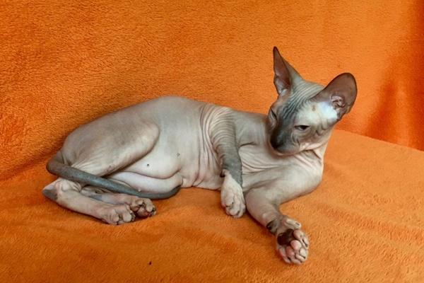 gatto disteso sul divano