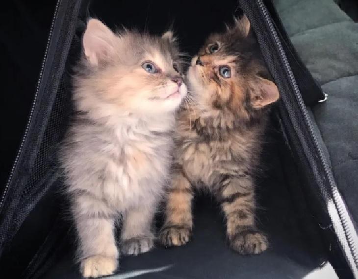 zelda safira casa nuovi spazi gattine