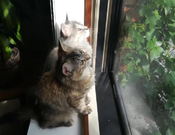 zelda safira gatti passatempo finestra