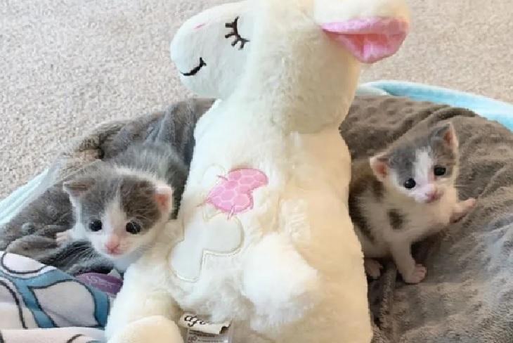 jace e jax spettacolo casa gatti