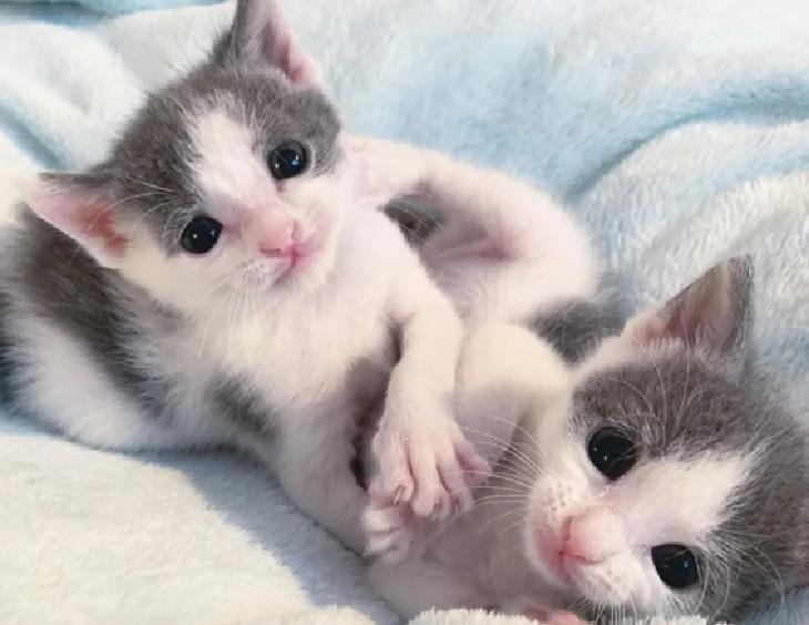 jax e jace gattini cercano casa