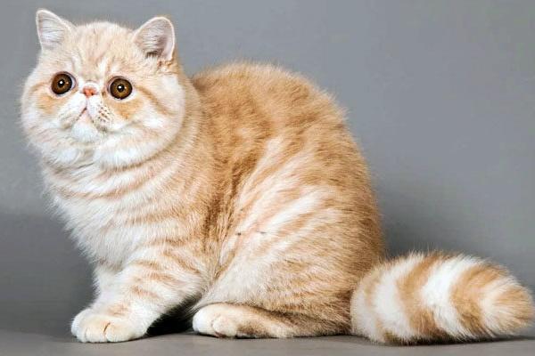 gatto con il mantello a pelo di media lunghezza