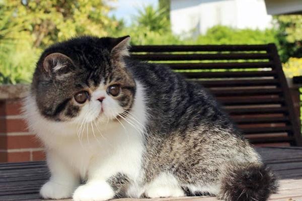 gatto che gioca in giardino