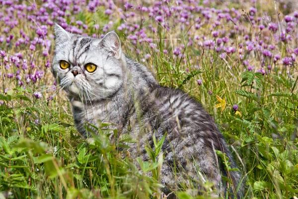 gatto che gioca tra i fiori