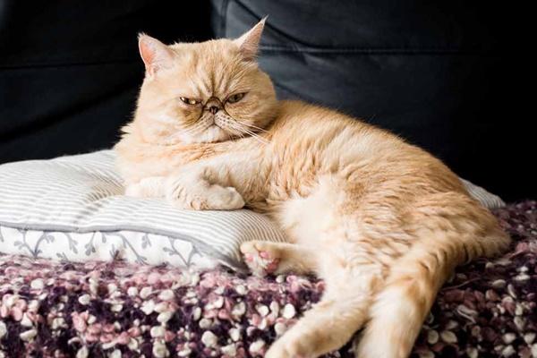 gatto che dorme sul divano