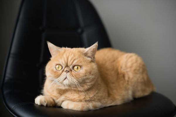 gatto seduto su una poltrona