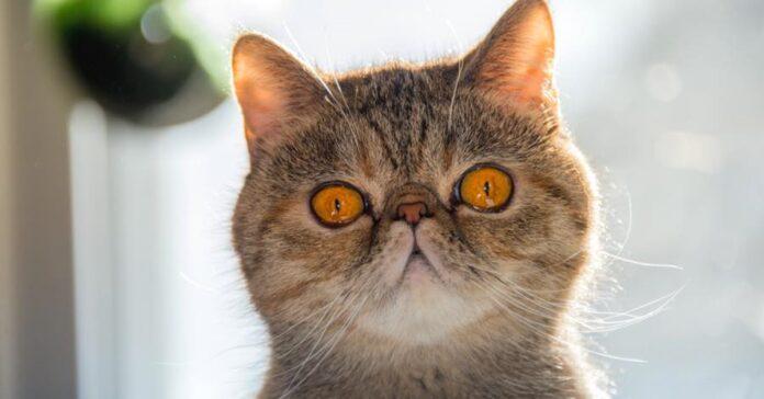 gatto con lo sguardo buffo
