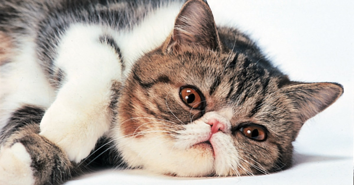gatto che riposa sul pavimento
