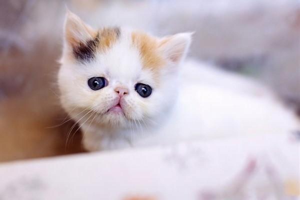 gattino con lo sguardo dolce