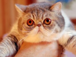 prendere in braccio il gatto
