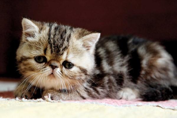 prendersi cura di un gattino