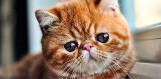 gatto con lo sguardo triste