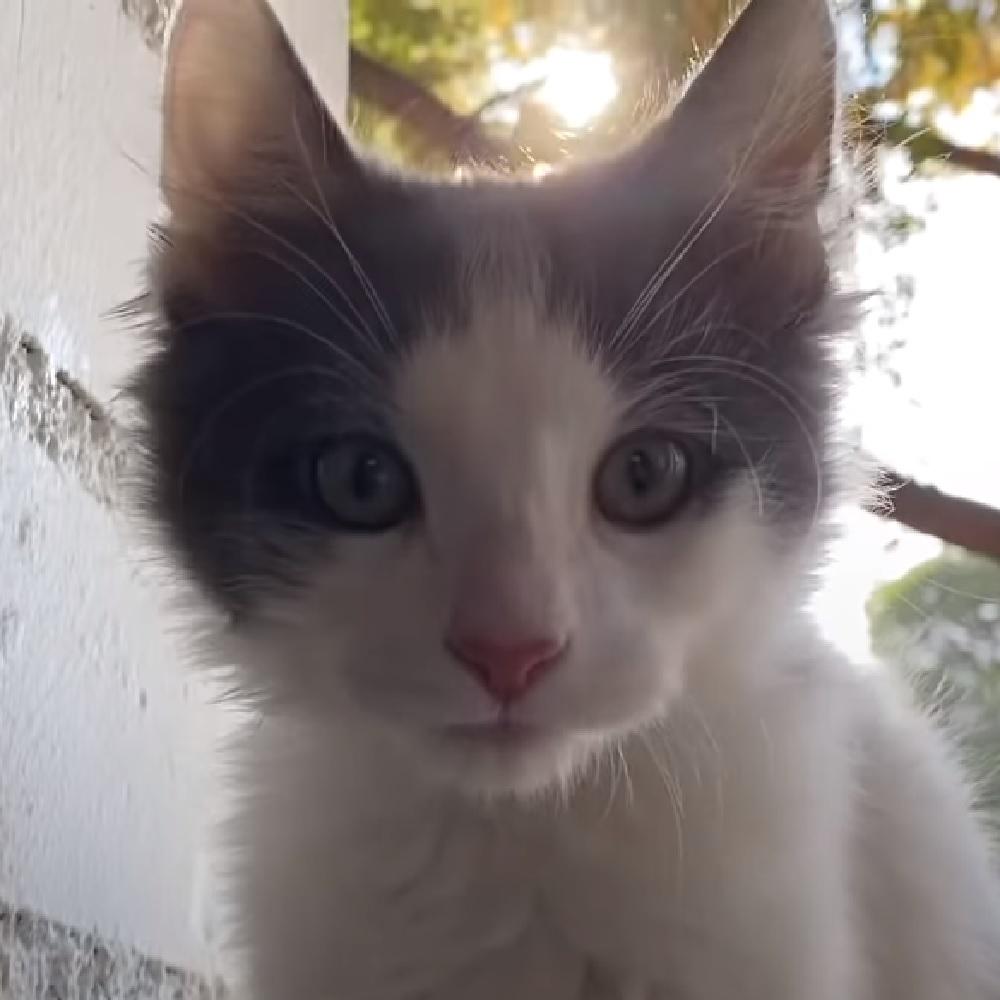 feral gatto carattere unico