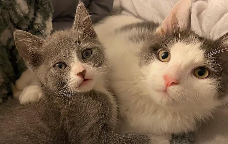 feral gatto amici fratelli