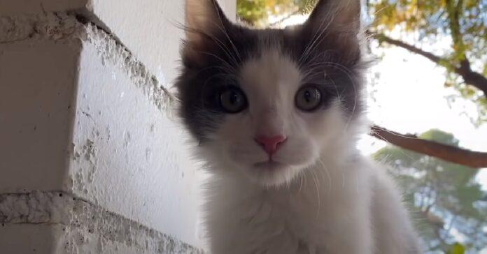 feral gattino adottato diventa migliore fratellino