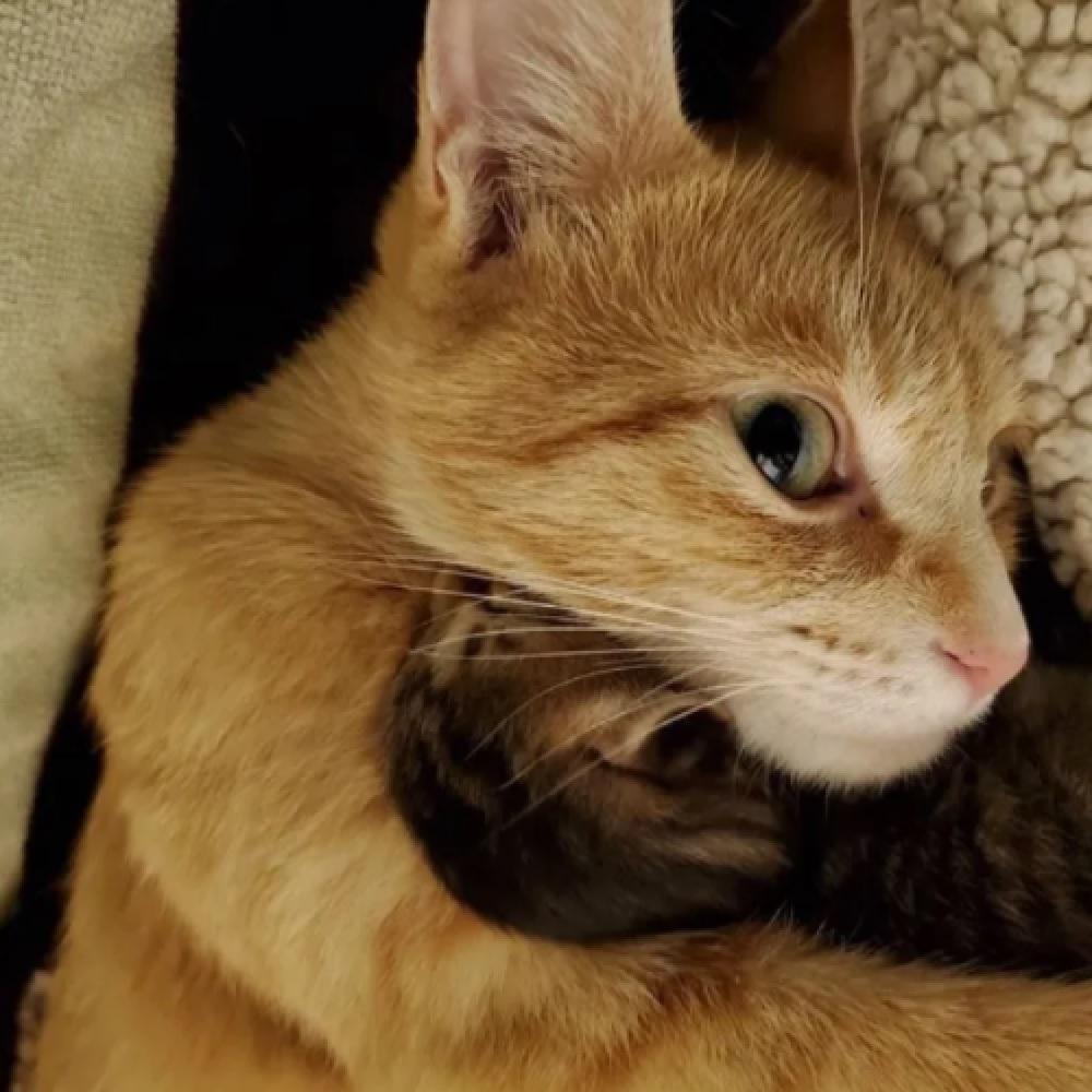 buttercup gatta mamma perfetta