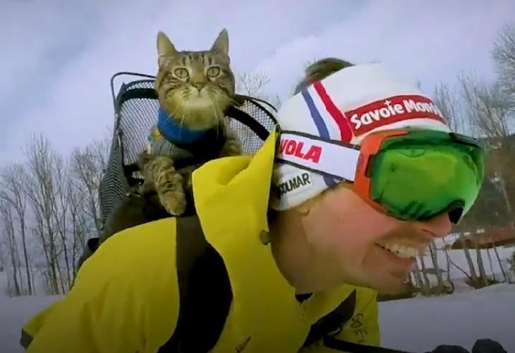 cathode gatto esperienza sci