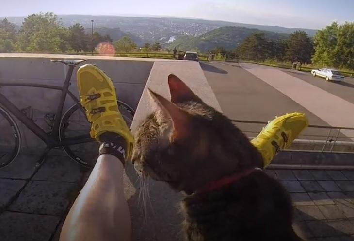 cathode gatto amante avventura