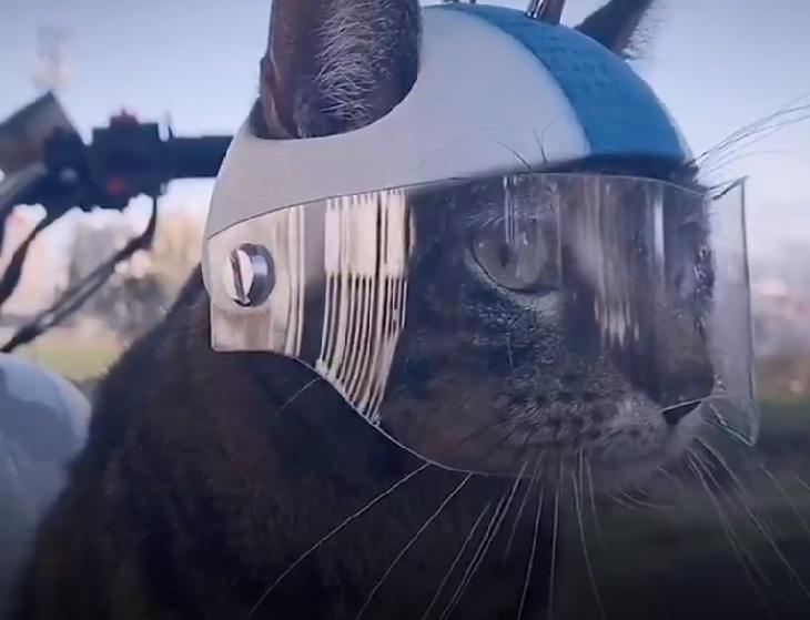 cathode gatto casco su misura