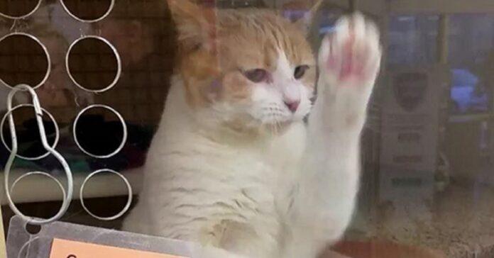 gattina cerca casa saluta ospiti rifugio