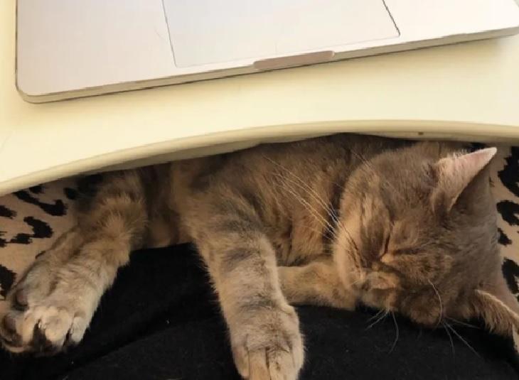 idgie gattina studio team veterinario