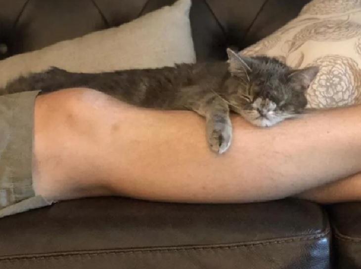 idgie gattina trova bene casa nuova