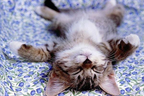 gattino che dorme supino
