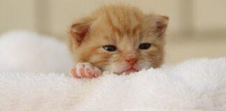 gattino su asciugamano